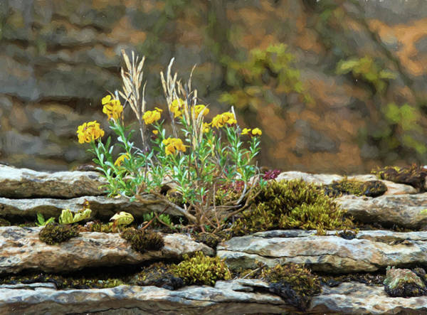 Chateauneuf Photograph - Moss And Flower, Chateauneuf, Cote-d'or, France by Curt Rush
