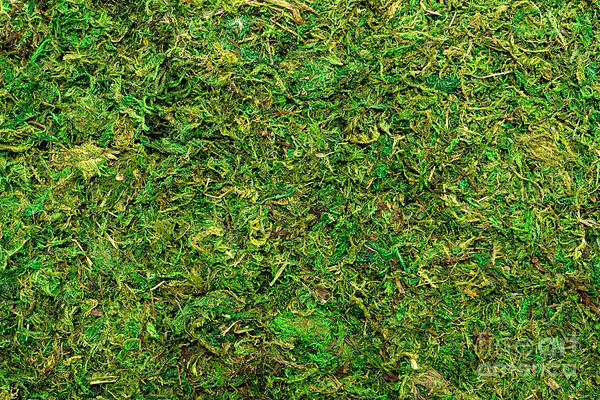 Photograph - Moss Background by Olivier Le Queinec