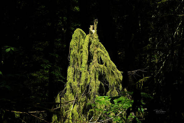 Photograph - Moss Cover by Bill Posner