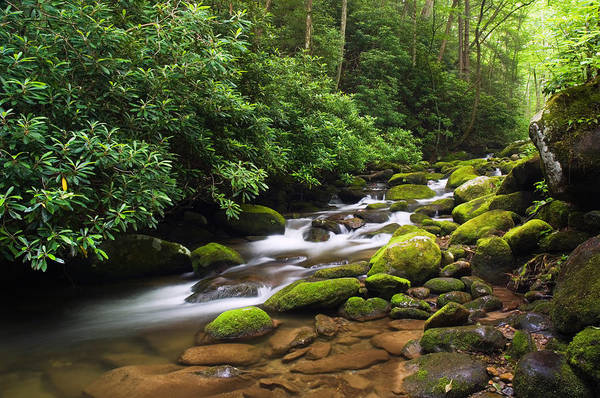 Humid Photograph - Moss-covered Boulders Along Roaring by Panoramic Images