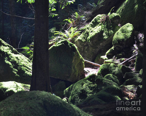 Photograph - Moss Covered Boulders by Kirt Tisdale