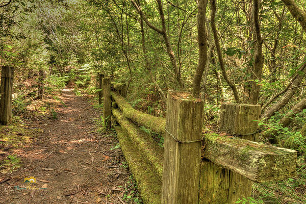 Photograph - Moss Covered Footbridge Rails by Jim Thompson