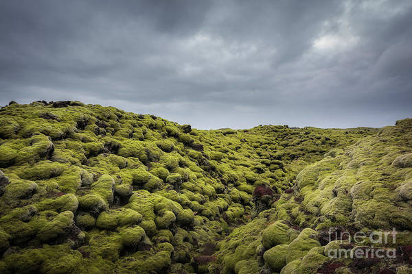 Photograph - Moss Covered Lava Field by Michael Ver Sprill