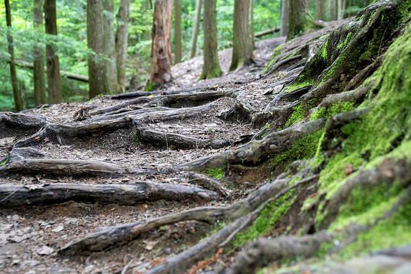 Photograph - Moss Glen Falls - Vermont by Christopher Brown