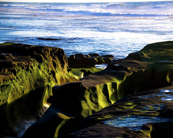 Photograph - Moss Glow by Robert McKay Jones
