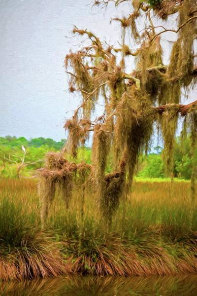 Photograph - Moss Hanging On The Loop by Alice Gipson