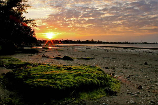 Sun Set Photograph - Moss On The Beach by Angie Wingerd