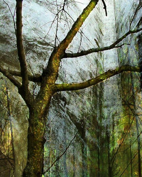 Moss Digital Art - Moss On Tree by Ken Walker