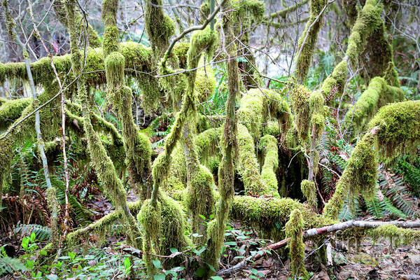 Photograph - Moss Takeover by Carol Groenen