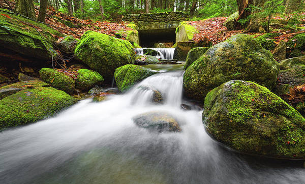 Photograph - Mossy Bridge by Robert Clifford
