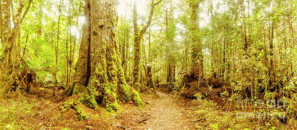 Wall Art - Photograph - Mossy Forest Trails by Jorgo Photography - Wall Art Gallery