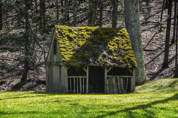 Manger Photograph - Mossy Manger In Spring by Bill Cannon