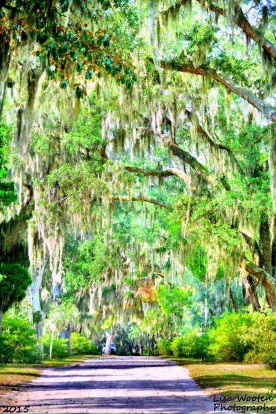 Photograph - Mossy Oak Pathway H D R by Lisa Wooten