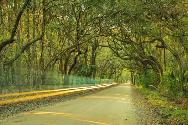 Photograph - Mossy Oaks Canopy In South Carolina by Ranjay Mitra