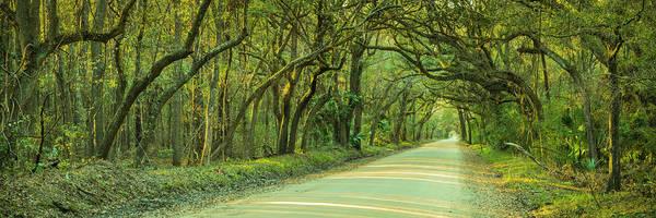 Photograph - Mossy Oaks Canopy Panorama by Ranjay Mitra