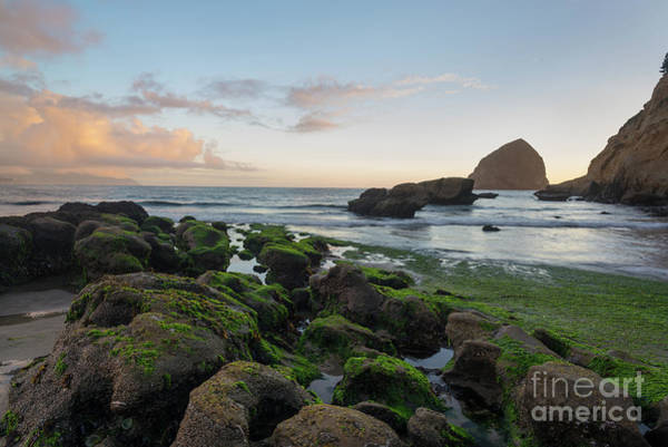 Wall Art - Photograph - Mossy Rocks At The Beach by Paul Quinn