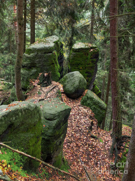 Woodland Wall Art - Photograph - Mossy Rocks In The Forest by Michal Boubin