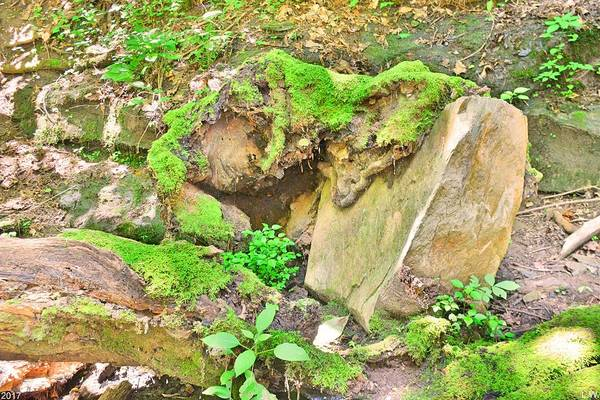 Photograph - Mossy Stump Meets Rock by Lisa Wooten