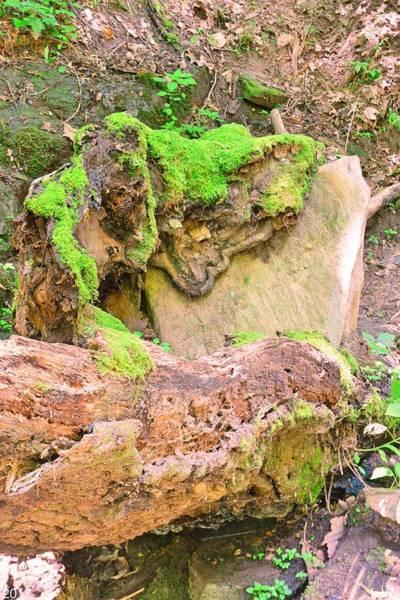 Photograph - Mossy Stump Meets Rock Vertical by Lisa Wooten