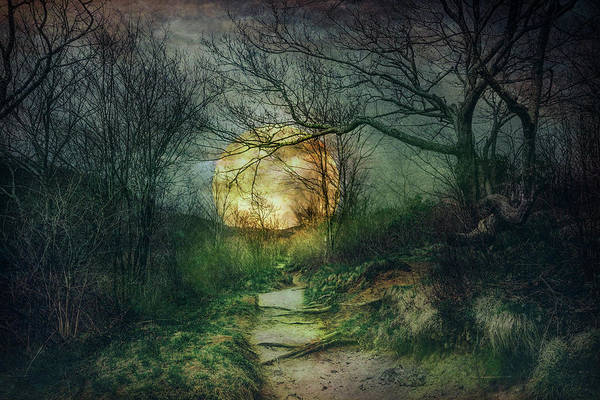 Photograph - Mossy Trail At Nightfall by Debra and Dave Vanderlaan