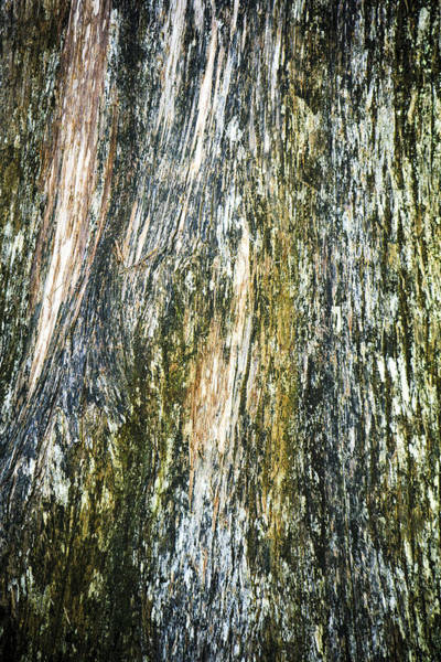 Wall Art - Photograph - Mossy Tree Bark by Marilyn Hunt
