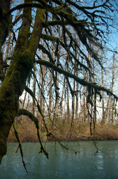 Photograph - Mossy Tree By The Skokomish River by Jani Freimann