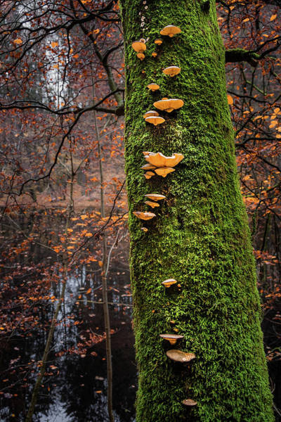 Photograph - Mossy Tree With Shrooms by Alexander Kunz