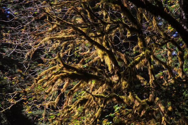 Photograph - Mossy Trees by Bonnie Follett