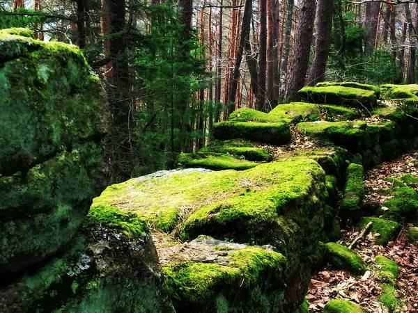 Photograph - Mossy Wall by Digital Art Cafe