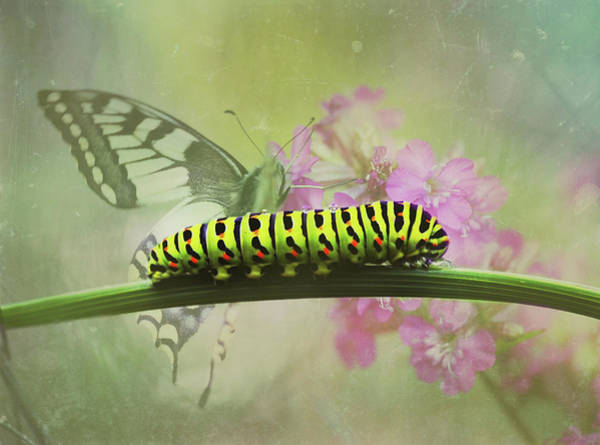 Photograph - Moth And Caterpillar In Spring by Isabella Howard