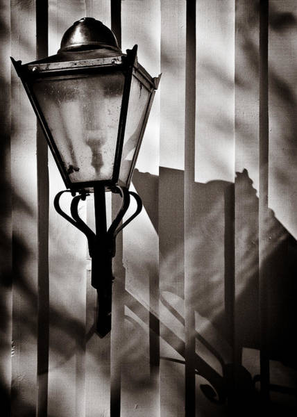 Traps Photograph - Moth And Lamp by Dave Bowman