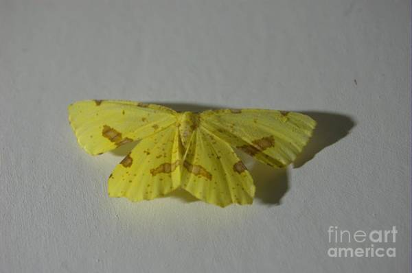 Wall Art - Photograph - Moth On Gesso by The Stone Age