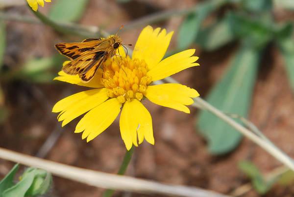 Photograph - Moth On Yellow  by Teresa Blanton