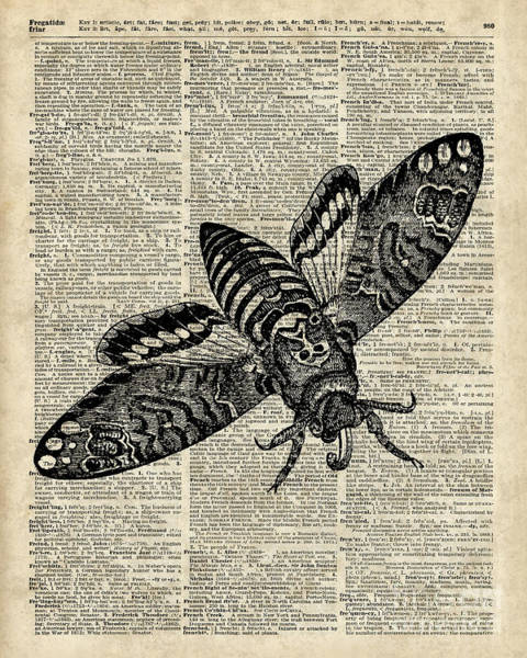 Wall Art - Digital Art - Moth Over Dictionary Page by Anna W