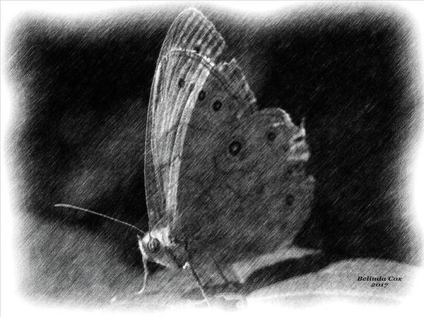 Digital Art - Moth Sketch by Artful Oasis