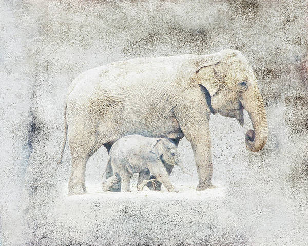 Photograph - Mother And Baby Elephant Minimalism by Isabella Howard