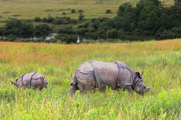 Pasture Wall Art - Photograph - Mother And Baby Rhinos by Tom Mc Nemar