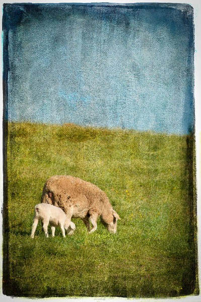 Photograph - Mother And Lamb by Joye Ardyn Durham