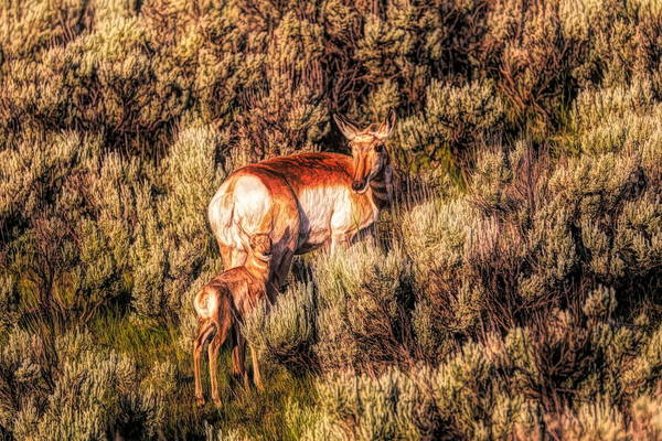 Painting - Mother Antelope In Sagebrush by Dan Sproul