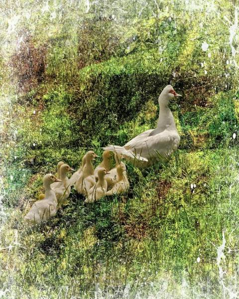 Digital Art - Mother Duck And Ducklings by Rusty R Smith