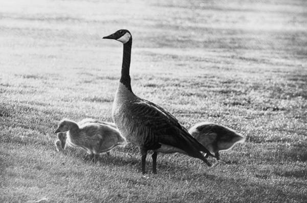 Mother Goose Photograph - Mother Goose by Camille Lopez