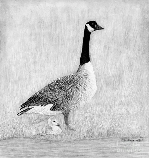 White Goose Drawing - Mother Goose by George Sonner