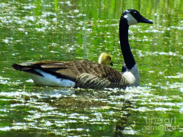 Mother Goose Photograph - Mother Goose by Robyn King