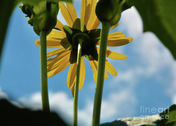 Photograph - Mother Natures Sun by Robyn King