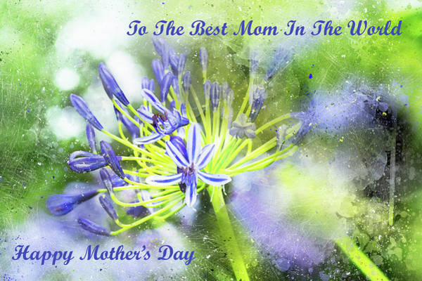 Photograph - Mother's Day Card With Agapanthus by Kay Brewer