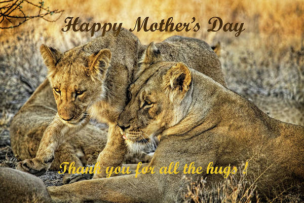 Photograph - Mother's Day Card With Lions by Kay Brewer