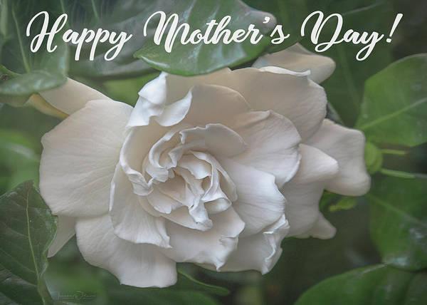 Photograph - Mother's Day Gardenia by Teresa Wilson