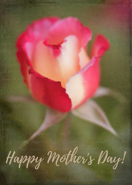 Photograph - Mother's Day Rose by Teresa Wilson