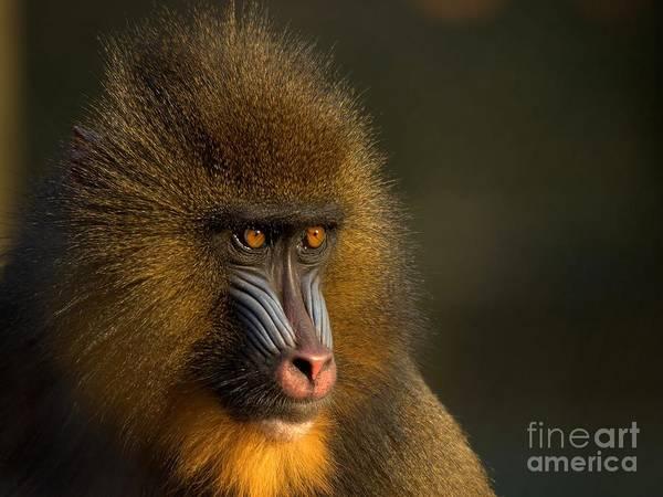 Monkey Photograph - Mother's Finest by Jacky Gerritsen