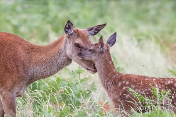 Photograph - Mothers Love by Paul Farnfield